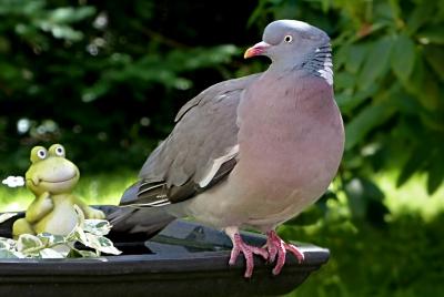 Tauben vertreiben mit Ultraschall